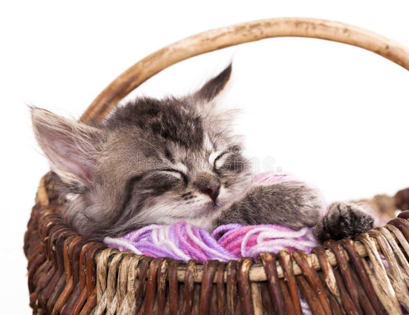 Sonno del gattino fotografia stock libera da diritti