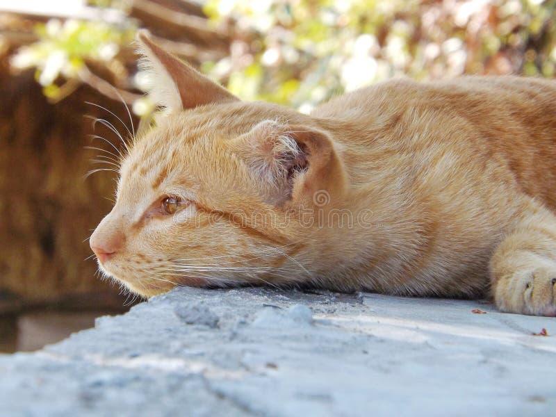 Sonno del gatto all'aperto fotografie stock libere da diritti