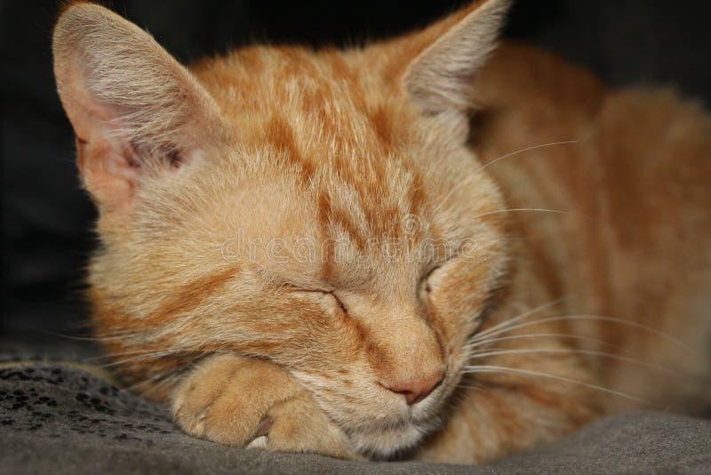 Sonno del gatto dello zenzero fotografie stock