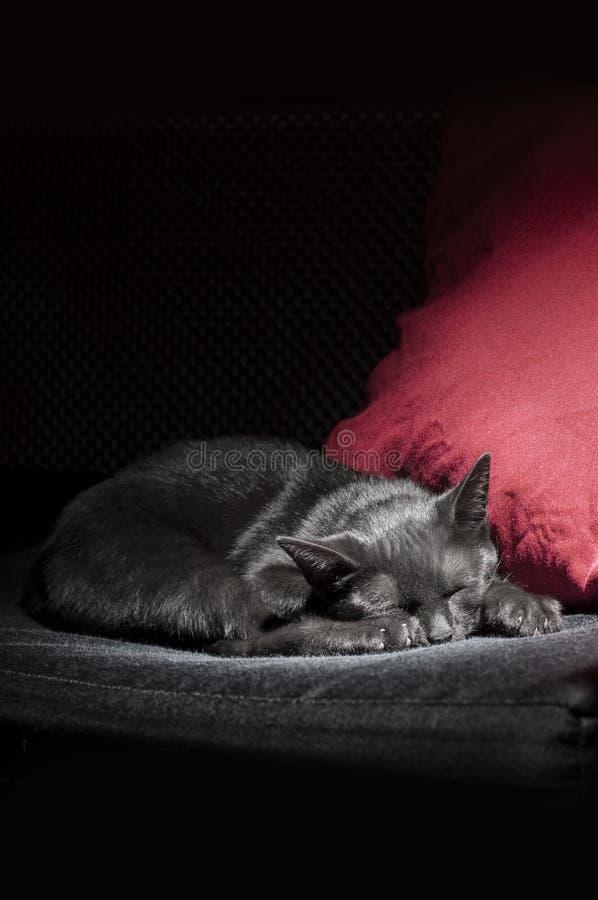 Sonno del gatto nero fotografia stock libera da diritti