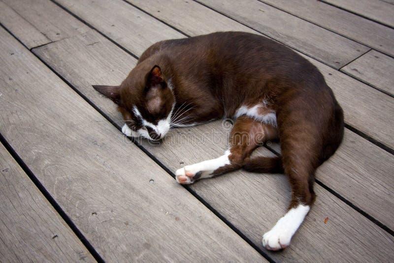 Sonno del gatto siamese sul pavimento piano di legno immagini stock libere da diritti