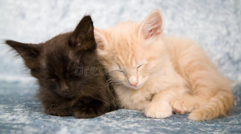 Download Sonno insieme immagine stock. Immagine di disteso, adorable - 3890545