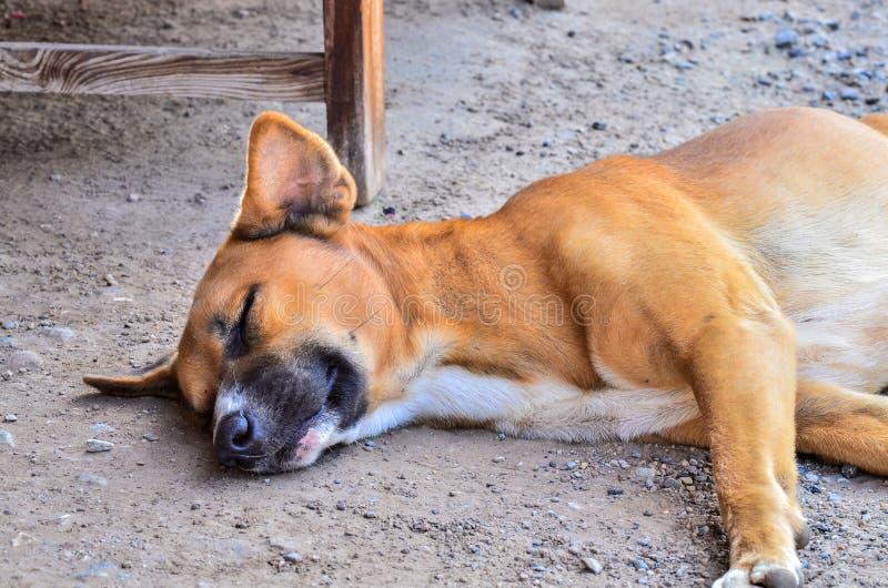 Sonno senza tetto solo del cane fotografia stock libera da diritti