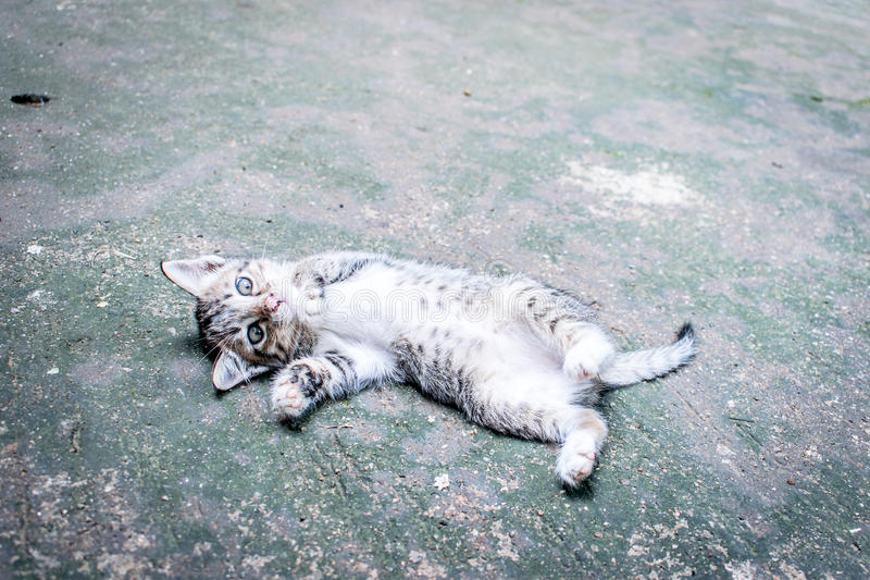 Sonno sveglio del gatto fotografia stock libera da diritti