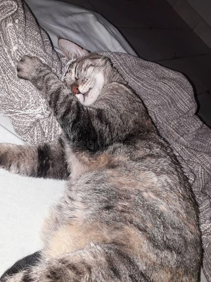 sonno sveglio dell'animale domestico fotografie stock libere da diritti