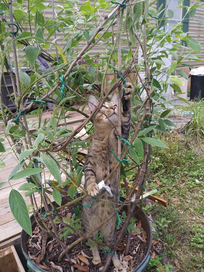 Sonny de kat stock afbeelding