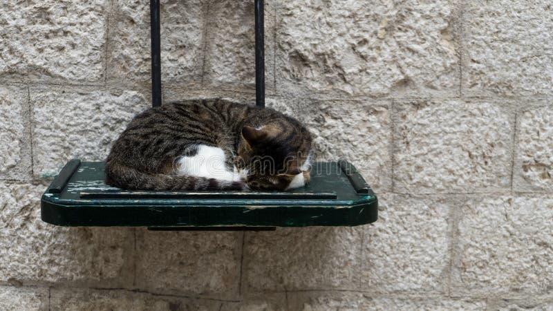 Sono bonito gato cinzento e branco, dormiu na tabela de madeira verde na rua, conceito - relaxe Sono feliz do gato que encontra-s imagem de stock