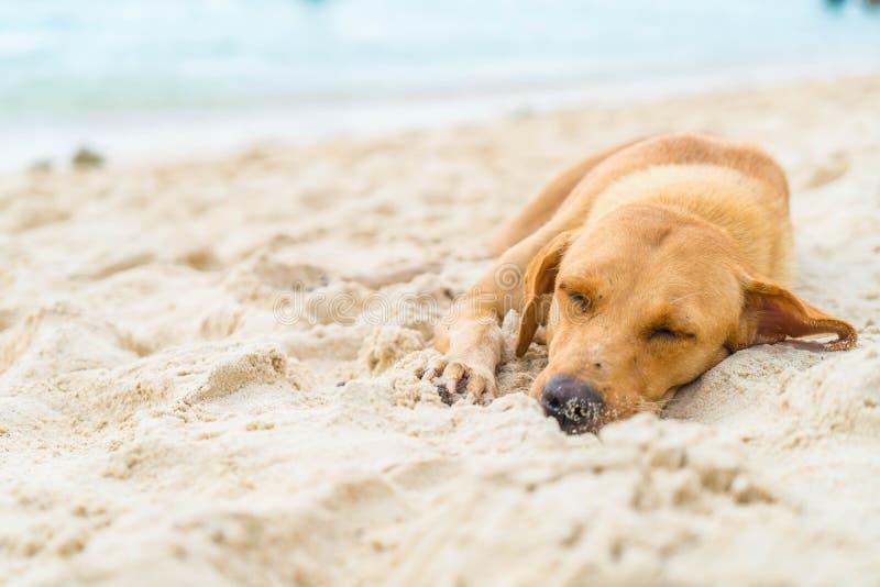 sono do cão na praia fotografia de stock