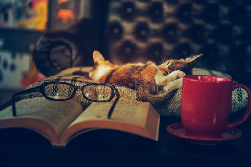 Sono do gato com monóculos do livro e copo de café fotografia de stock royalty free