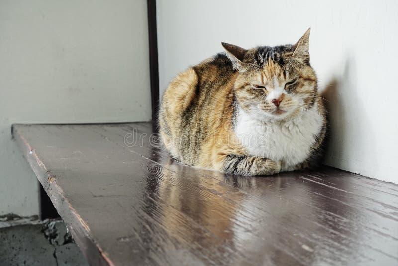 Sono do gato da rua foto de stock