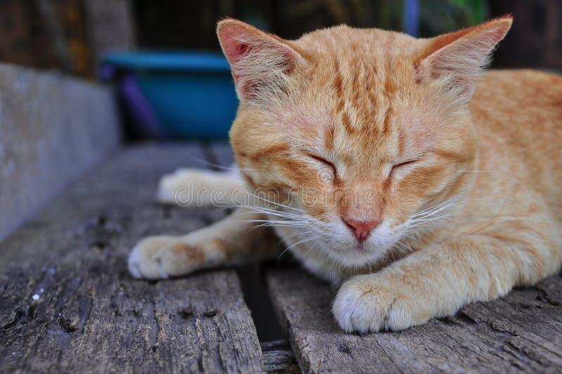 Sono do gato de gato malhado do vermelho alaranjado imagem de stock royalty free