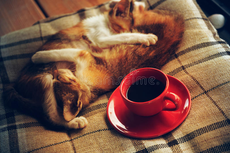 Sono do gato no copo do descanso e de café imagem de stock