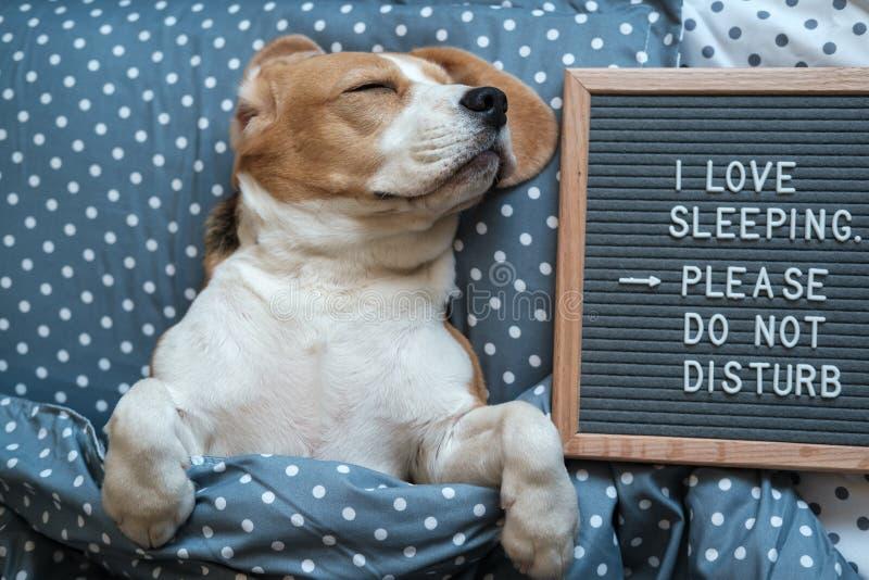 Sono engra?ado do lebreiro do c?o no descanso ao lado da placa com a inscri??o que eu amo dormir Por favor n?o perturbe imagens de stock