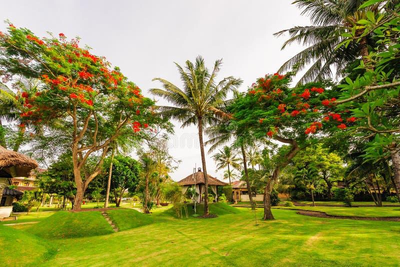 Gli alberi rossi del fiore immagine stock immagine di for Gli alberelli prezzi