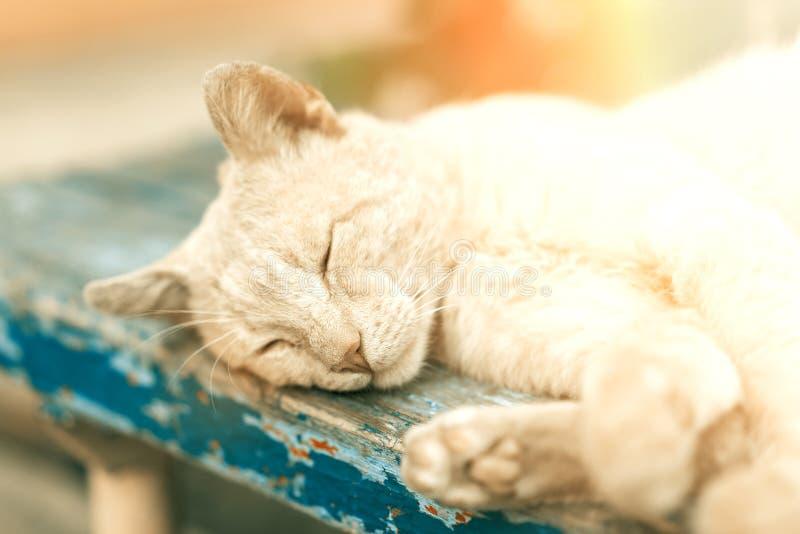 sono Vermelho-dirigido do gatinho do gato preguiçoso na rua imagens de stock royalty free