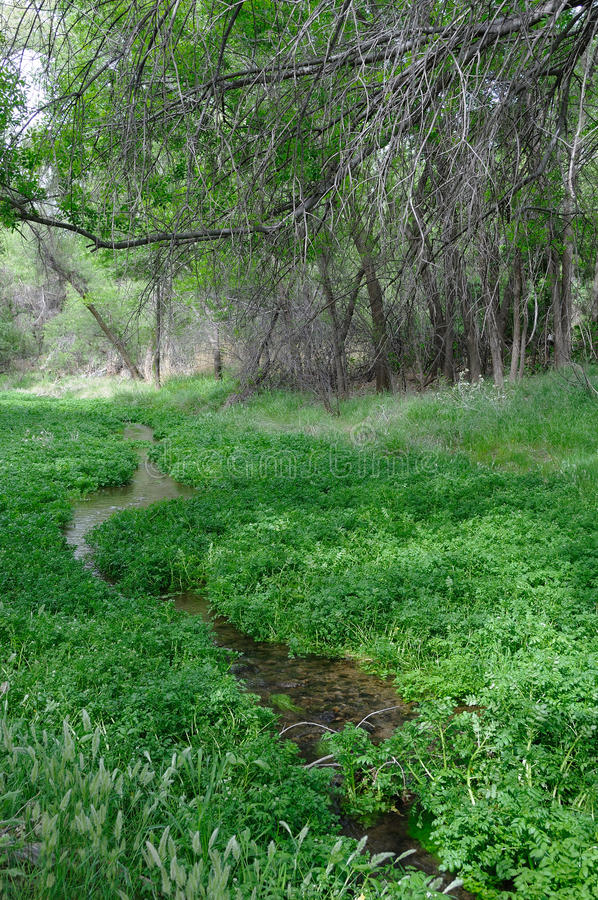 Download Sonoita Creek Natural Conservancy Stock Photo - Image of peaceful, sycamore: 12192536