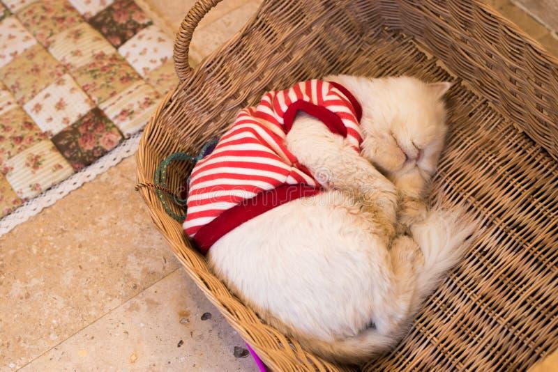 Sonolento um gato alaranjado adorável fotografia de stock