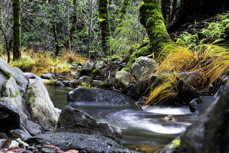 Sonoma-Kreek die door Verrukte Forrest in Sugarloaf Ridge State Park, Californië vloeit stock foto's