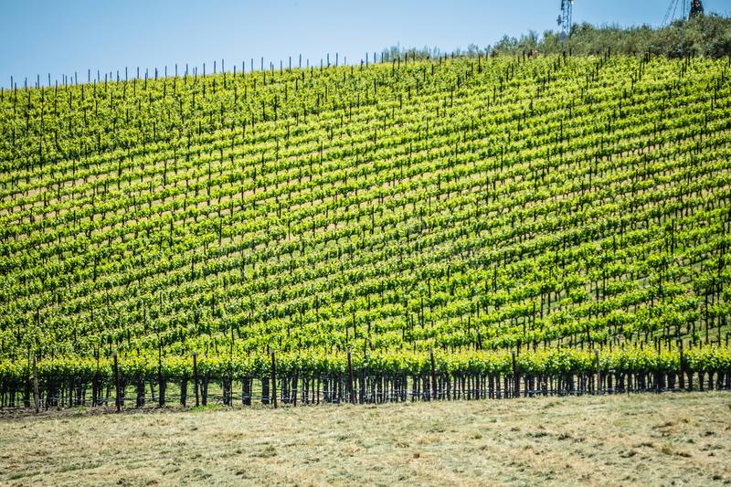 Sonoma and napa valley vinyards in california stock photography