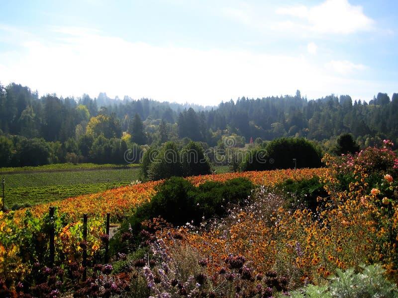 Sonoma okręgu administracyjnego winnicy & x28; California& x29; zdjęcia stock