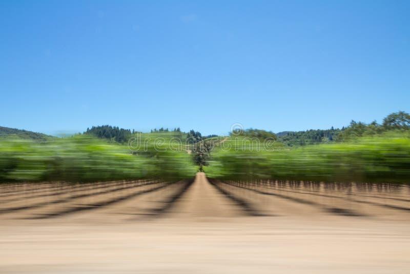Sonoma-Valleiwijnstokken en bomen van een bewegende auto stock fotografie