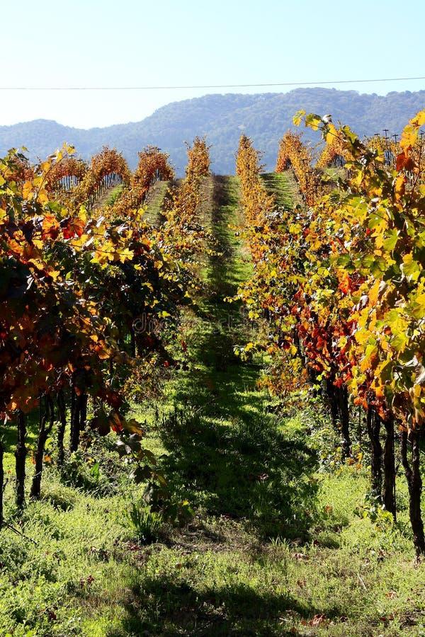 Sonoma vineyard royalty free stock images