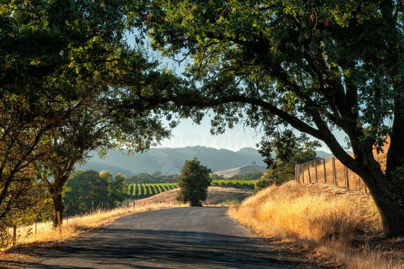Sonoma-Weinanbaugebiet stockbilder