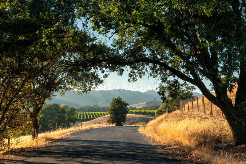 Sonoma wine country. Road trip through Sonoma wine country at harvest time stock images