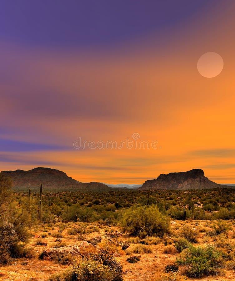 Sonoraökensolnedgång fotografering för bildbyråer