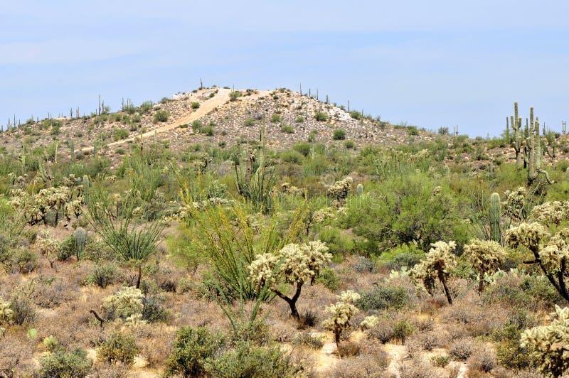 Sonora Desert Arizona. Mountain road in the Sonora desert in central Arizona USA stock photo