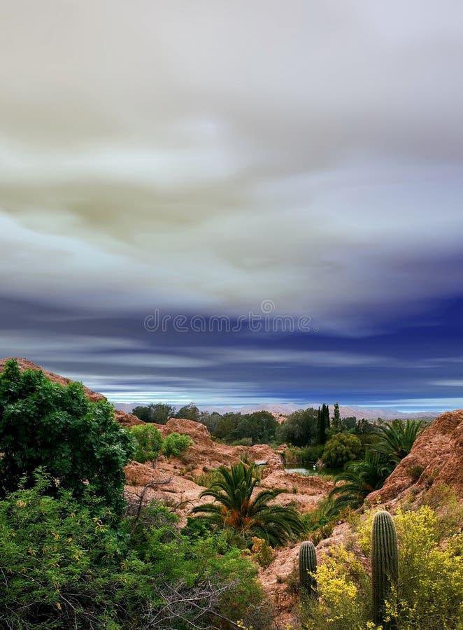 Sonora Desert Arizona Oasis. Oasis Sonora desert in central Arizona USA stock image