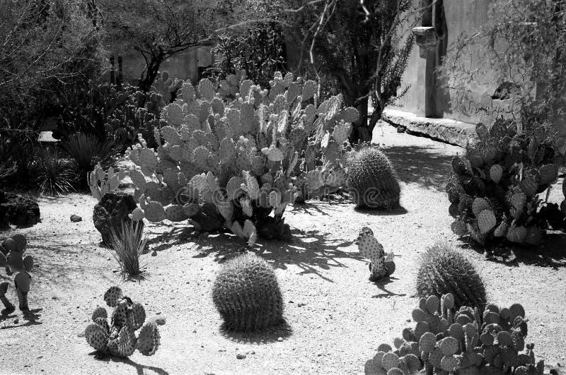 Sonora desert Cactus Garden. Prickly pear and variety of cactus in the Arizona Sonora desert cactus garden royalty free stock images