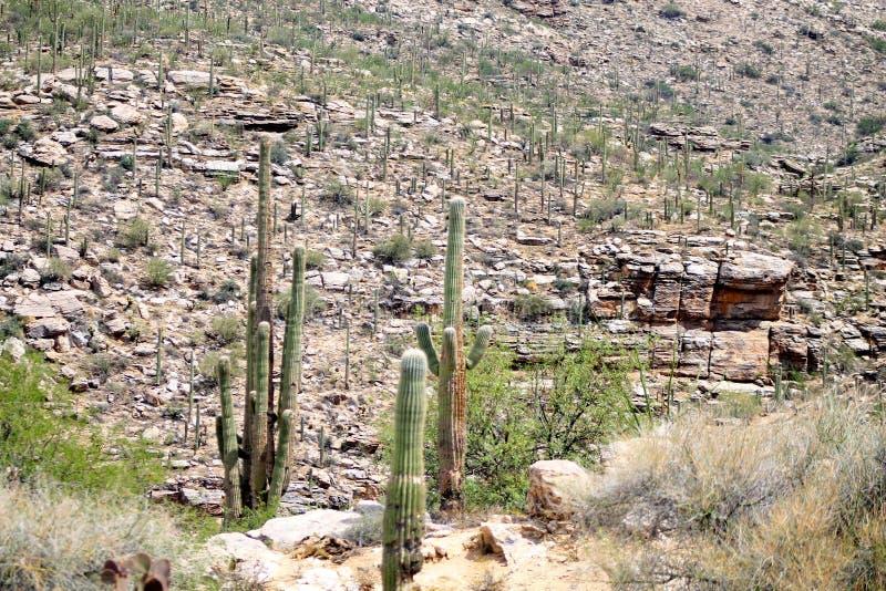 Sonoran沙漠岩石地形 库存照片