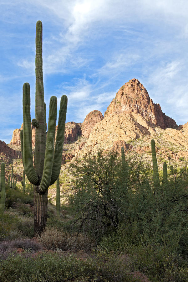 Sonoran Desert Stock Photography