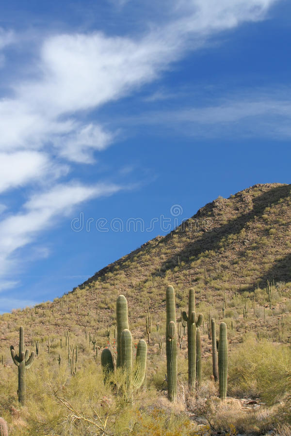 Download Sonoran Desert stock photo. Image of scenic, green, survival - 25917500