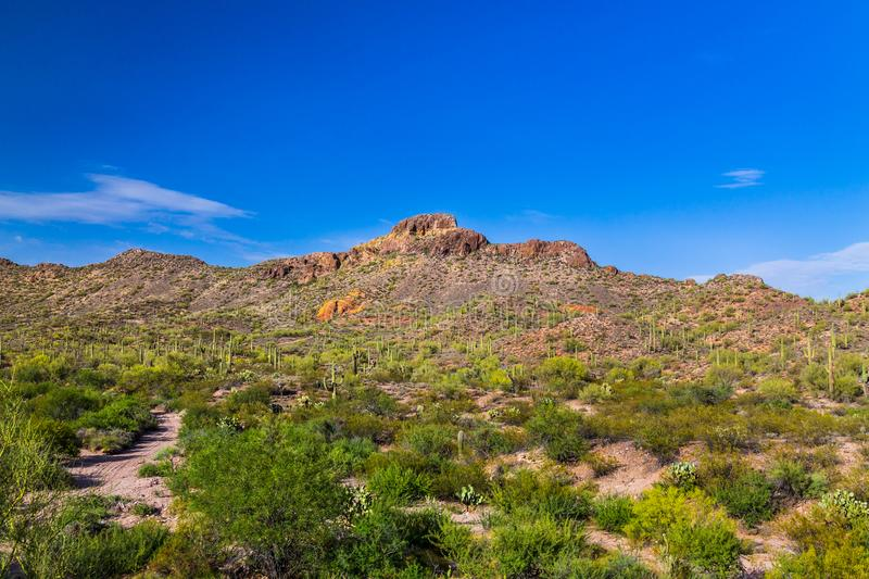 Sonoran desert in Arizona. Saguaro cactus and other native plants in foreground with sandy dirt road; rocky hills. stock image