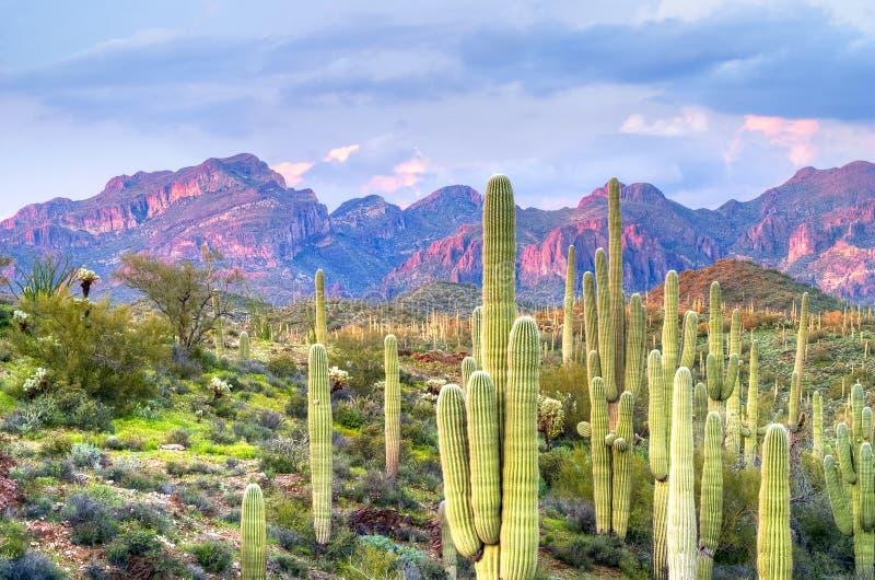 Sonoran Desert stock images