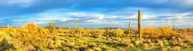 Sonoran pustynia obraz royalty free