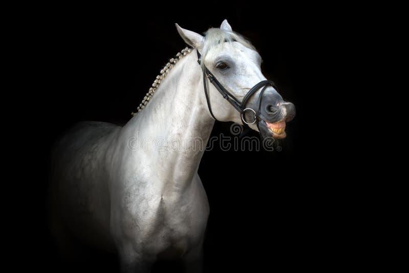 Sonrisa del caballo fotos de archivo