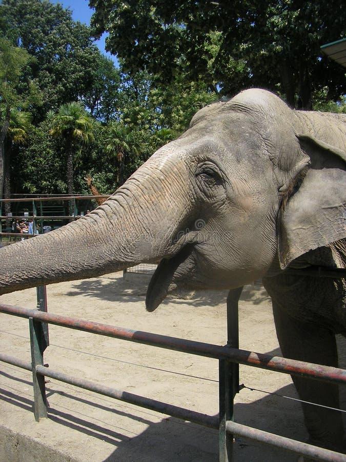Sonrisa del elefante fotos de archivo