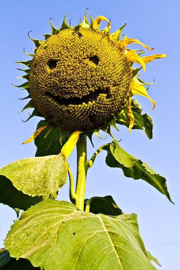 Sonrisa del girasol. imágenes de archivo libres de regalías