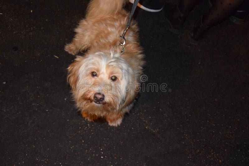 Sonrisa del perro imagen de archivo libre de regalías