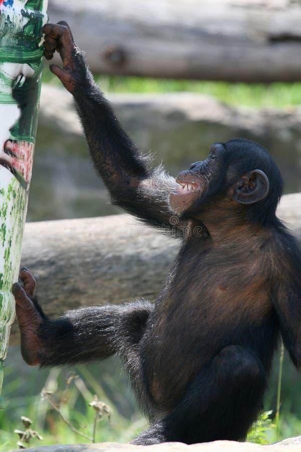 Sonrisa joven del mono imagen de archivo libre de regalías