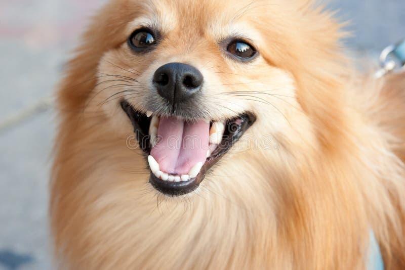 Sonrisa linda y perro feliz fotografía de archivo