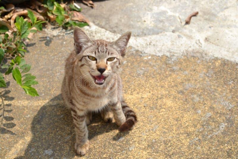 Sonrisas al aire libre del gatito imagen de archivo