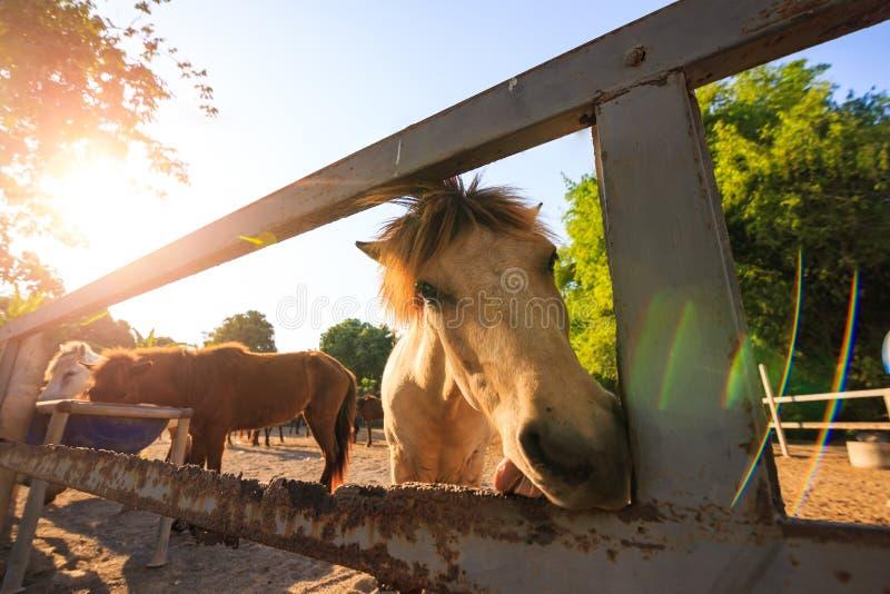 Sont le cheval dans la cage entre la lumière du soleil et la fusée image stock