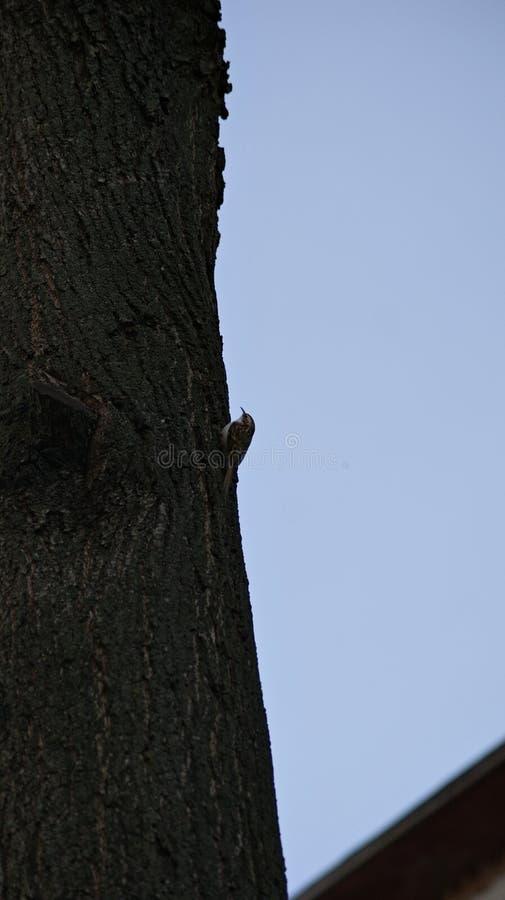 Loud little bird stock image