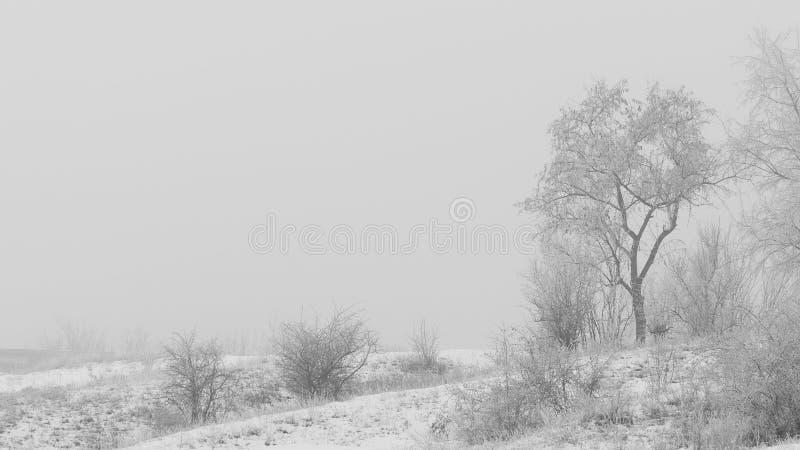 Soort boom op een mistige de winterdag De vorst werd de takken behandeld met hoar vorst Zachte nadruk royalty-vrije stock foto