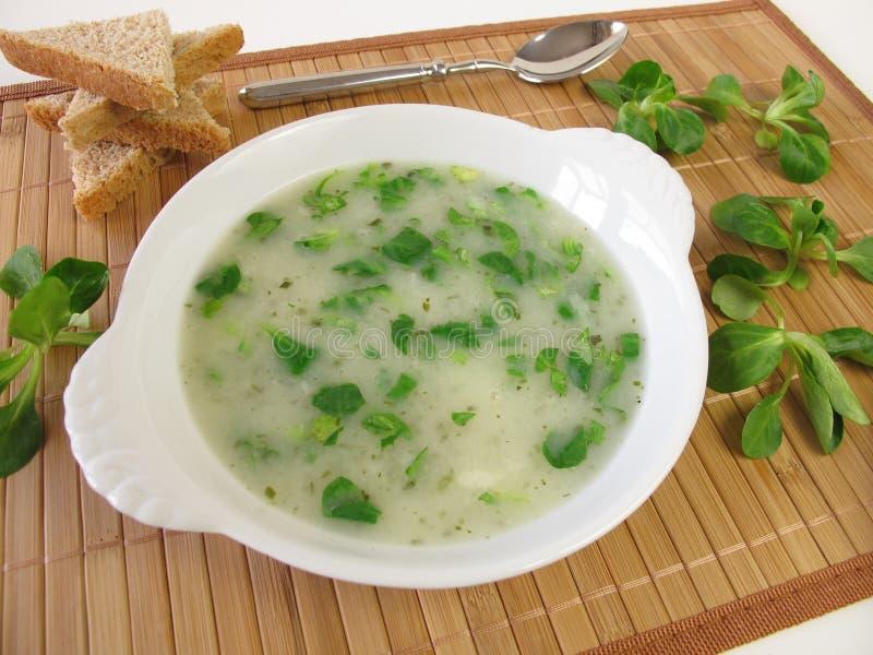 Sopa da salada de milho imagens de stock royalty free