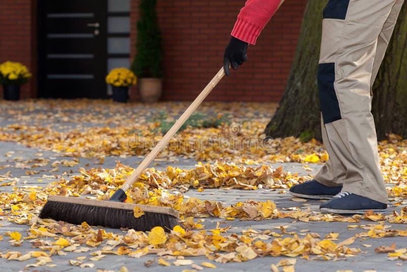 sopa för leaves arkivfoto